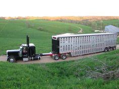 Streched bull hauler peterbilt