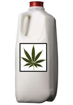 """Cannamilk  - IT DOES A BODY GOOD - How to Make Cannamilk   Cannamilk could be considered a """"mother sauce"""" in the world of edible cannabis as it really can be substituted into any recipe that calls for milk, making it versatile like cannabutter or cannaoil."""