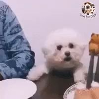 See what she is doing, is this fair 😂 - Tiere - tierbabys Funny Dog Videos, Funny Animal Memes, Cute Funny Animals, Funny Animal Pictures, Cute Baby Animals, Funny Cute, Funny Dogs, Cute Dogs, Wild Animals