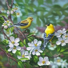 Artist  The acrylic paintings by artist Bradley Jackson can bri...
