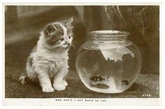 Google Image Result for http://eyedealpostcards.com/images/postcards/CatFishPhoto1856.jpg
