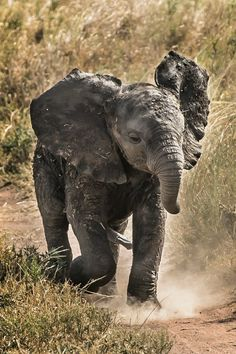 "tulipnight: "" Little elephant by Kinan Echtay """