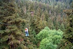 Zip line through the redwood forest. That would be amazing!!