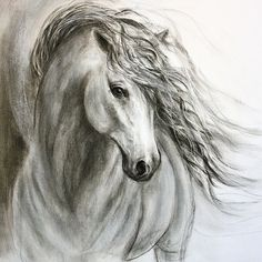 Original Charcoal horse drawing of 'Equine by FerraroFineArt