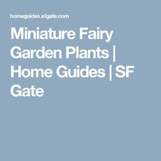 Miniature Fairy Garden Plants | Home Guides | SF Gate