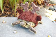 Reindeer tortoise cozy - made to order on Etsy, $21.00 I'm thinking there may be a high demand for these ;)