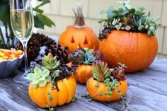 Use pumpkins to create succulent terrariums for fun + whimsical vibes.
