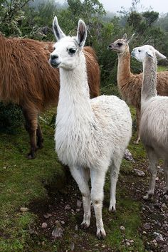 Give the ones you love wings to fly, roots to come back and reasons to stay.  Today's Daily Llama
