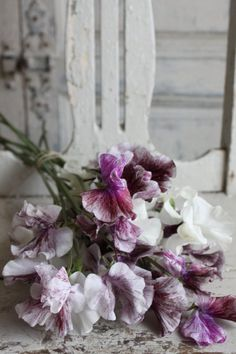 purple, mauve, and lilac sweet peas My Flower, Beautiful Flowers, Flower Types, Beautiful Voice, Vibeke Design, Deco Floral, Shades Of Purple, Purple Grey, Dream Garden