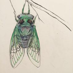 Cicada Drawing    juliakodlart.com