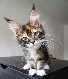 My...what big ears you have