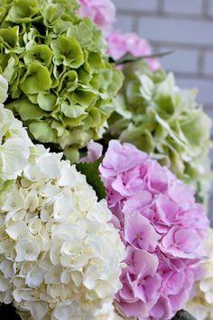 Flowers & Gelato - A match made in heaven from McQueens & Black Vanilla | Flowerona