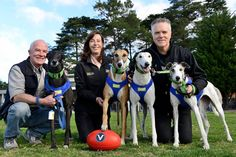 GAP dogs with the Eley Park Sharks