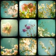 Most definitely taken with either a Diana, Holga or Lomo camera. Wonderful!
