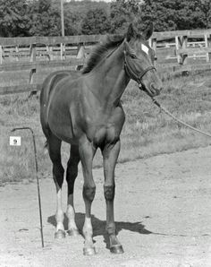 A hard to find photo of Secretariat as a baby. Are you looking intently to see how to pick a great one too?
