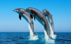 delfines fondo de pantalla - ForWallpaper.com