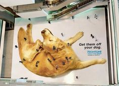 Genius Guerrilla #Marketing examples...take a closer look at the 'fleas'! #advertising #ambient