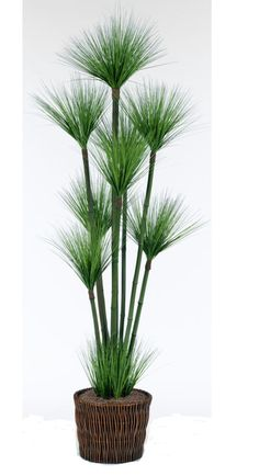 Green Grass Tree Sales - Get the perfect home decor at My Rooms Furniture Gallery! Tree Sale, Modern Coastal, Coastal Furniture, Furniture Styles, Green Grass, Online Furniture, My Room, Plants, Home Decor