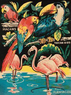Tropical Hobbyland - Birds Retro Travel Vintage Parrot Toucan Print Poster 24x32