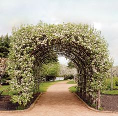 Espalier--rather enchanted by all the possibilities