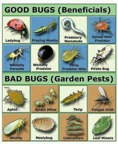 Good bug/bad bug