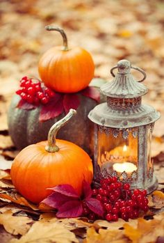 Not sure if i could carve a pumpkin with this - but I would use it for stenciling Halloween goody bags! Autumn Morning, Autumn Cozy, Autumn Scenes, Autumn Aesthetic, Fall Wallpaper, Fall Pictures, Fall Pumpkin Pictures, Harvest Pictures, Autumn Photography
