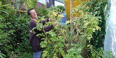 """""""Ich bin echt gespannt, wie die Ernte aussehen wird"""", sagt Verena Bartoniczek. Die 49-jährige Gärtnerin baute im Frühjahr einen Kartoffelturm. Aus Estrichtmatten und Kabelbinder erstellte sie ein rund 1,30 Meter hohes Grundgerüst. Der Durchmesser beträgt rund einen ..."""