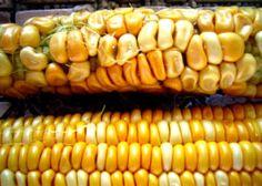 ¿Qué pasaría si tres megacorporaciones dominaran el mercado agroalimentario mundial?