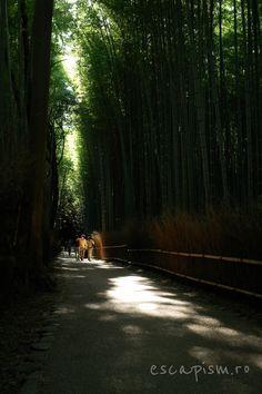 Arashiyama Forest Bamboo Kyoto