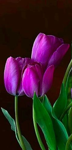 Purple tulips • photo: via Sweet Lil Mz Mia