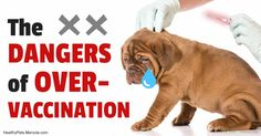 Many veterinarians still over-vaccinating pets when a simple blood test can actually tell them if the animal is immune. http://healthypets.mercola.com/sites/healthypets/archive/2017/06/25/pets-over-vaccination.aspx?utm_source=petsnl&utm_medium=email&utm_content=art1&utm_campaign=20170625Z1&et_cid=DM148690&et_rid=2055182973