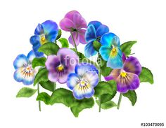 "Download the royalty-free photo ""Blue Pansy Spring flowers, Viola tricolor isolated on white background. Digital illustration"" created by sofiartmedia at the lowest price on Fotolia.com. Browse our cheap image bank online to find the perfect stock photo for your marketing projects!"