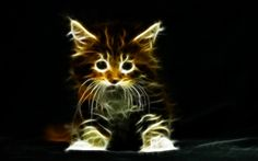 animal fractals | Little Kitten-Fractalized - Cats & Animals Background Wallpapers on ...