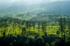 Beautiful tea plantation in West Java, Indonesia