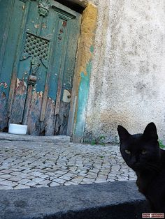Door and cats in Coimbra-Portugal (Photo © Doors Portugal)