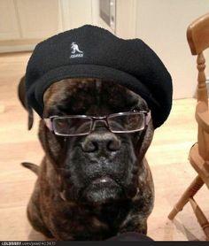 Samuel Dog Jackson | LOLBRARY.COM