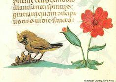 Book of Hours Belgium, ca. 1490