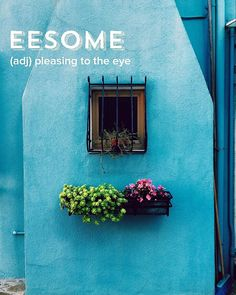What are some things that you find eesome? . . . . #devonstrang #wordoftheday #word #words #wordporn #dictionary #language #definition #eesome #eye #pleasing #beauty #beautiful #blue #turquoise #green #flowers #window #windowbox #color #hue