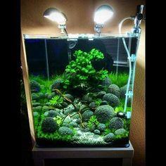 Pet tips nano aquarium aquascaping, forest aquascape, aq. Planted Aquarium, Cube Aquarium, Klein Aquarium, Tropical Fish Aquarium, Tropical Fish Tanks, Aquarium Fish Tank, Planted Betta Tank, Marine Aquarium, Aquascaping