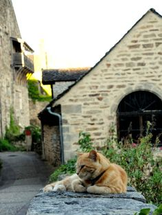 Najac in France has less than 1,000 inhabitants. Yet there's a local celebrity: a castle cat. Story and 6 photos at http://www.traveling-cats.com/2016/09/cat-from-najac-france.html