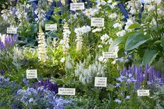 Every beautiful cottage garden has common principles that make them a success. Learn about the fundamentals you need to create your very own cottage garden. Flower Garden Plans, Plants, White Gardens, Urban Garden, Cottage Garden Design, Garden Borders, Garden Planning, Farmhouse Garden, Garden Tool Set
