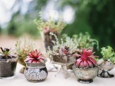 succulent centerpieces, wedding favors, or every day gifts?  via Oregon Succulents