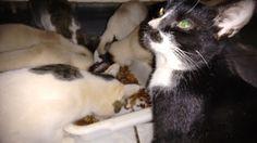 Fotos de Família: Curiosidades Sobre Gatos
