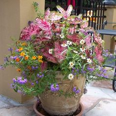 Container Plants Design Ideas, Pictures, Remodel, and Decor