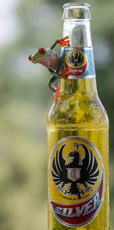 Even the frogs love the beer! Pura Vida!!.Costa Rica.
