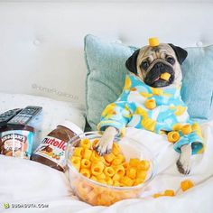 "Receive excellent suggestions on ""chinese pugs"". They are accessible for you on our internet site. Baby Animals Super Cute, Cute Baby Dogs, Baby Pugs, Silly Dogs, Cute Little Animals, Cute Funny Animals, Funny Dogs, Baby Animals Pictures, Cute Animal Pictures"