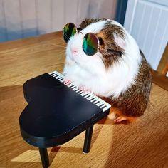 Small Animals, Cute Animals, Cute Guinea Pigs, Capybara, Cute Piggies, Strange Photos, Happy Animals, Cute Animal Pictures, Funny Stuff