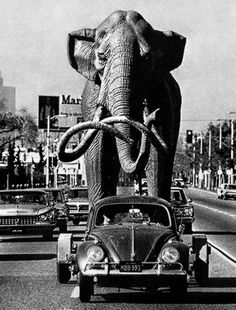January 18, 1967: A life-size imperial mammoth is towed behind sculptor Howard Ball's 1958 Volkswagen for installation at La Brea tar pits.