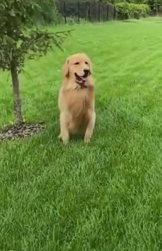 Funny Animal Jokes, Funny Dog Videos, Really Funny Memes, Stupid Funny Memes, Hilarious, Cute Animal Videos, Cute Animal Pictures, Funny Videos Of Animals, Cute Funny Dogs
