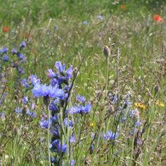 Urban pollinator mix